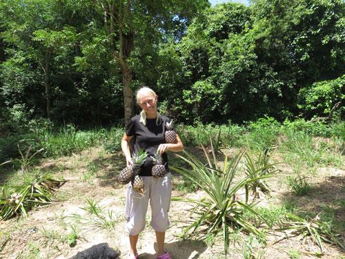 Sandy Ananas høst